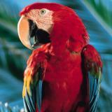 Parrot Talk